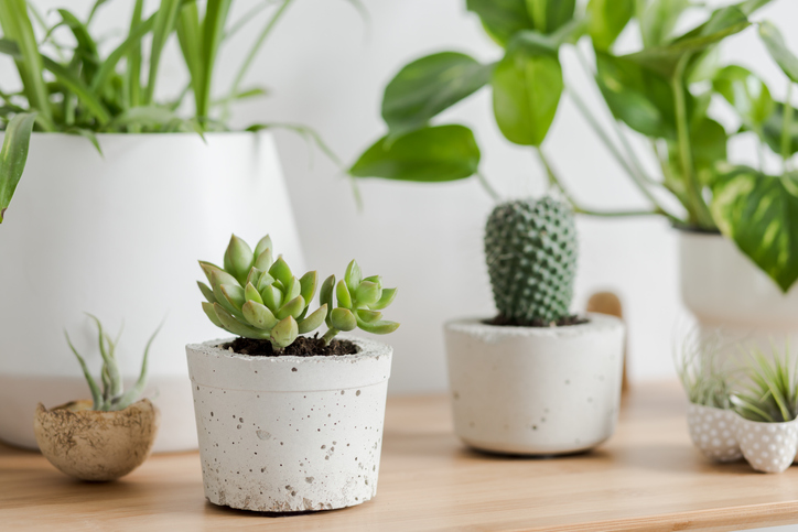 """""""Christmas-Gift-Guide-Succulents"""""""